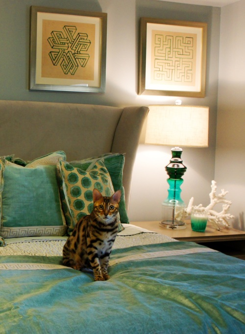 Gus, my client's handsome little Bengal kitty approves!