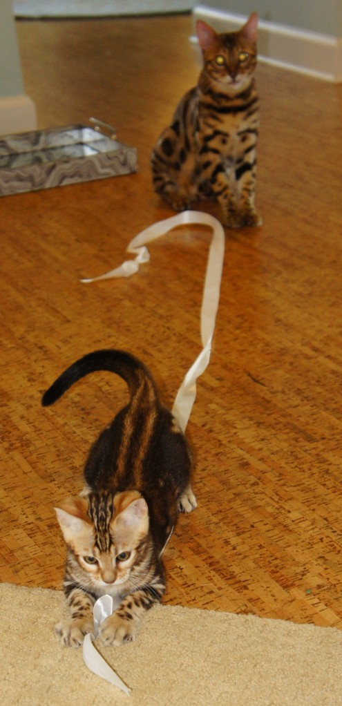 """Gus and Lilly Belle, """"helping"""" me untie some ribbon"""