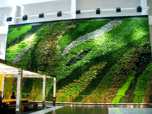 A 32' x 60' (1,920 sf) Interior Living Wall in a corporate atrium.